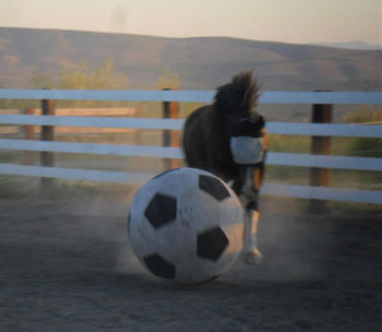 Socks Mitchell, soccer playing horse